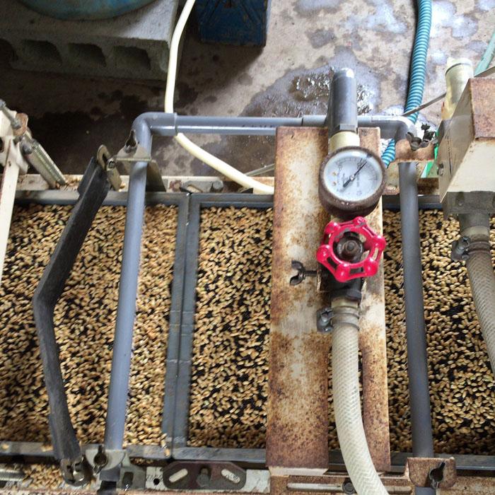 コシヒカリの籾を機械で均一にばら撒いている様子